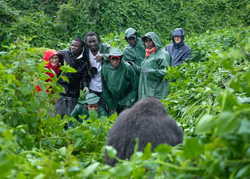 Gorilla Trekking is one of Uganda's greatest wildlife encounters and something we consider to be a unique adventure. As we celebrate #WorldGorillaDay share with us your unforgettable gorilla trekking experience.   #tourism #gorillatrekking #Uganda #EastAfrica https://t.co/6nMVpWEkZG
