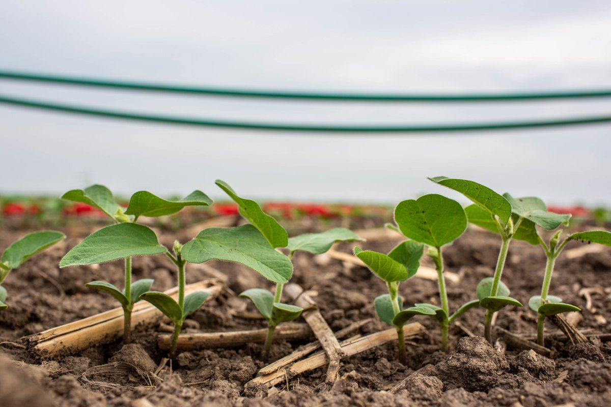 Call for proposals: FFAR - Innovative #Research Focused on Improving #ClimateResilience in #Crops #Agriculture #Maize #Rice #Sorghum #Millet #Wheat #SweetPotato #Cassava #Banana #Yam #CommonBean #Cowpea #Chickpea #Groundnut https://t.co/bOqBSp28nk https://t.co/xq4FAnGFpF