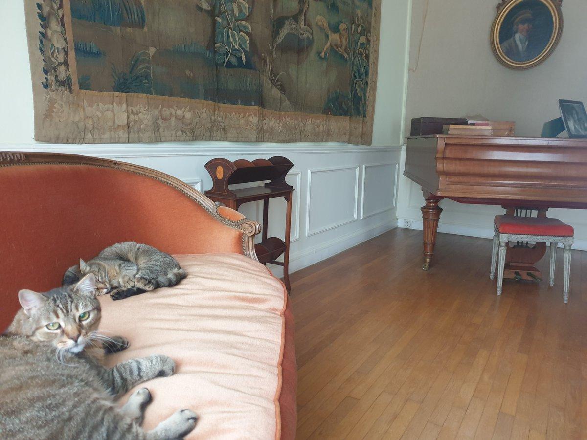 La vie de chat-eau est décidément très active 🤣 Messire Tupelo et Dame Grisette pour vous servir 🥰 #chateaudepreisch #salon #chats #animaux #pause #musique #détente https://t.co/uDC2kiGrhG