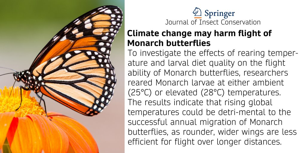 Increases in global temperature may reduce flight performance and alter wing shape of North America's Monarch butterflies in a way that may impede their ability to migrate, according to a study from @UMich published in the Journal of Insect Conservation. https://t.co/vi9zapfM7k https://t.co/5zKewGds0Z