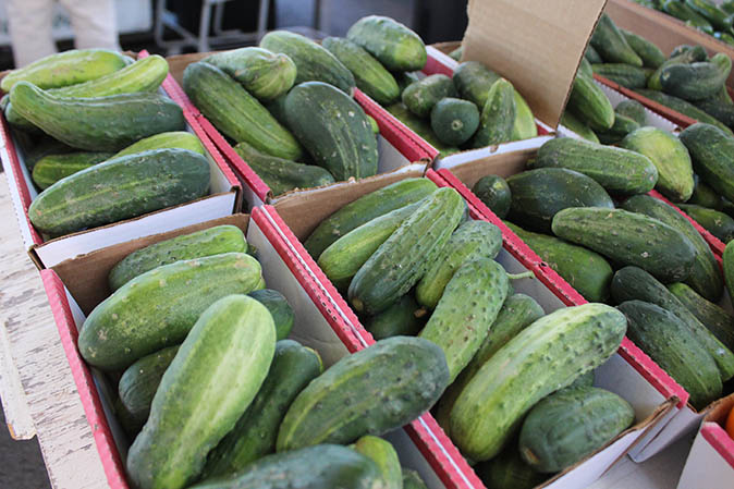 Fun Farm Fact: #Cucumbers belong to the plant family cucurbitaceae, which includes melons, squash and pumpkins! https://t.co/4LyKGVctpE