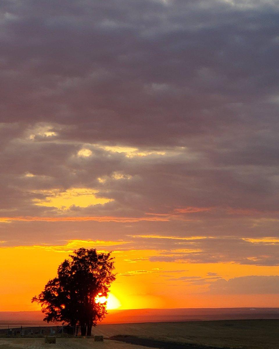 No matter, the sun sets. . #sunsets #sunset #sunsets_captures #sunsetlover #sunsetphotography #farmphotography #farmlife #sunlit #orangesky #landscape #landscapephotography #landscapecaptures #wheat #pnw #pnwphotography #pacificnorthwest #easternoregon #oregon #perspective https://t.co/S3vl4LKMos