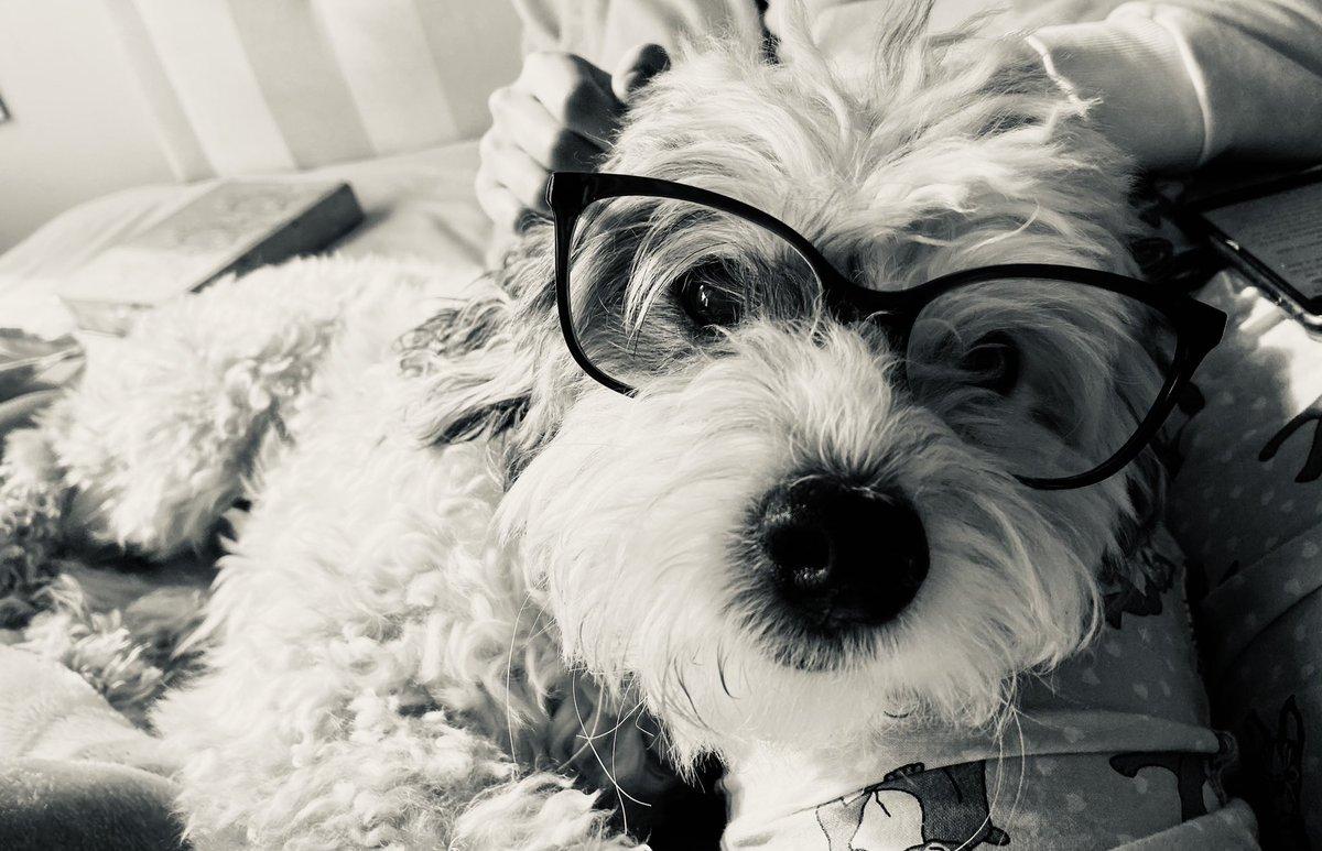 Mi #Max cumple 12 años en octubre, creo que necesita gafas, se pega con todo.#amorperruno https://t.co/J2ATjywx2z