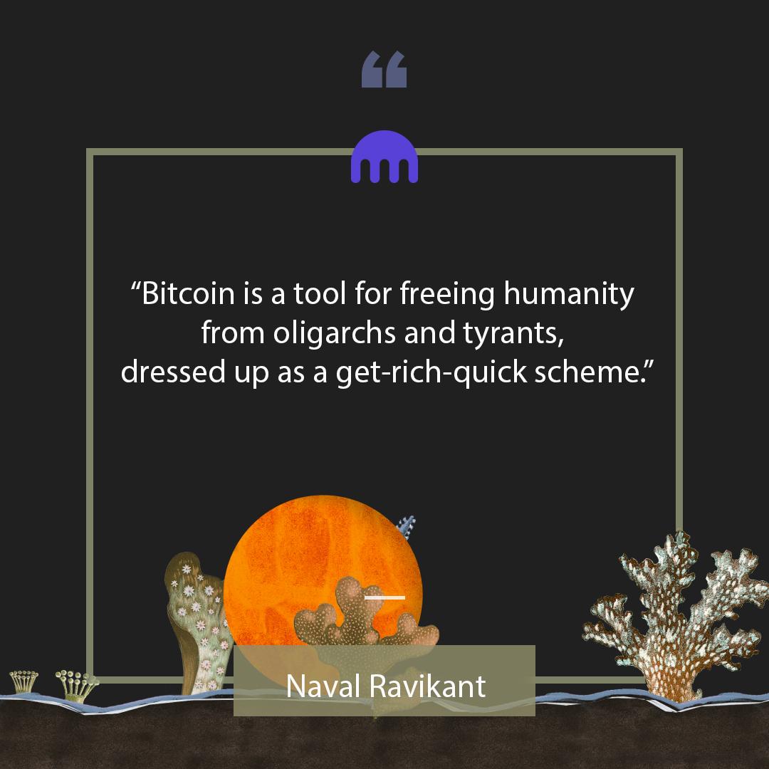 bitcoin trader xfx bitcoin trader šį rytą gordon ramsay