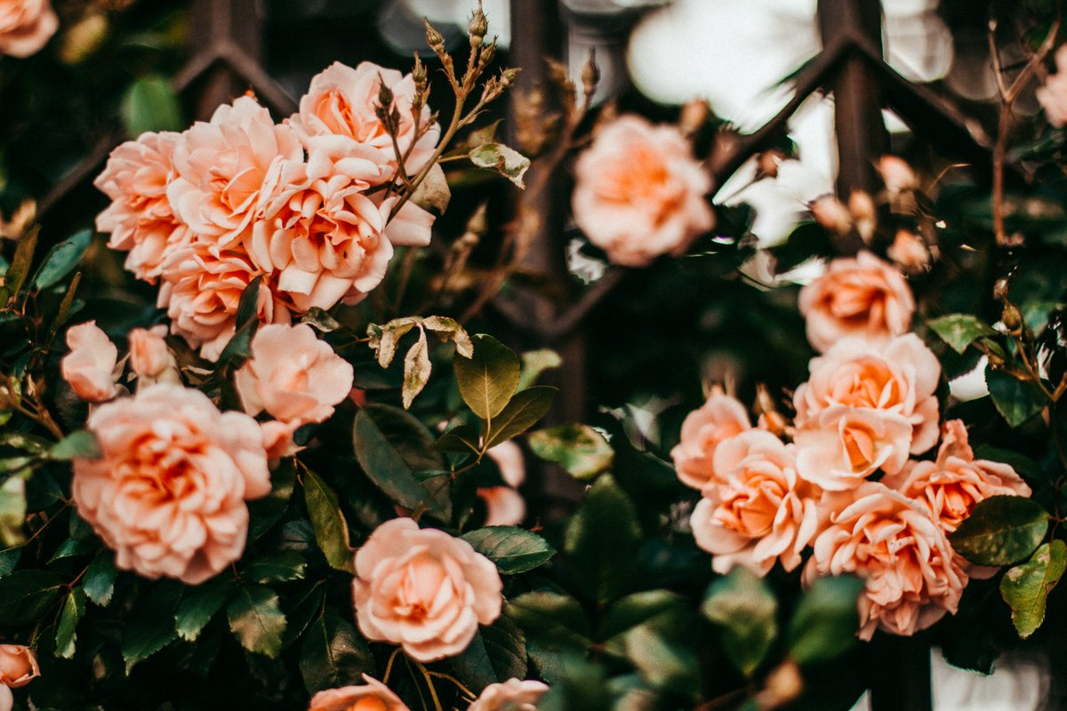 How You're Killing Your Roses Written by Crystal M How You're Killing Your #Roses https://t.co/VOrUeFixL1 #gardening https://t.co/ZbVCsyb6Id