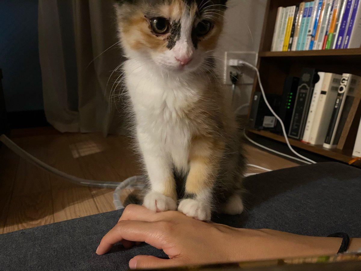 【猫あるある】 ちょっと乗る。 #子猫 #猫写真 #猫のいる生活 #猫可愛い #猫あるある #猫好きさんと繋がりたい https://t.co/ZpJMRPnwnN