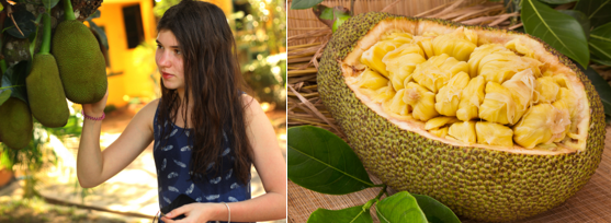 It commands attention wherever it is... big time. The jackfruit is the largest fruit in the world. Learn more in Snoboy Knows - Jackfruit. #jackfruit #snoboyknows #snoboyproduce #since1925 https://t.co/bgKIByOCnT https://t.co/IPM0LndxhC