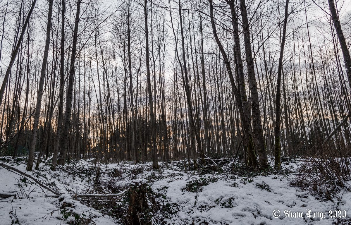 Desolate twilight, at Confederation Park, Burnaby.  #KamloopsBC #photographer #BurnabyBC #ConfederationPark #hiking  #desolate #twilight #BCparks #winter #snow #forest #trees #aftersunset #eveningsky #landscape #landscapephotography #Burnaby #BritishColumbia #BC #Canada https://t.co/O6a6QxuQ5L