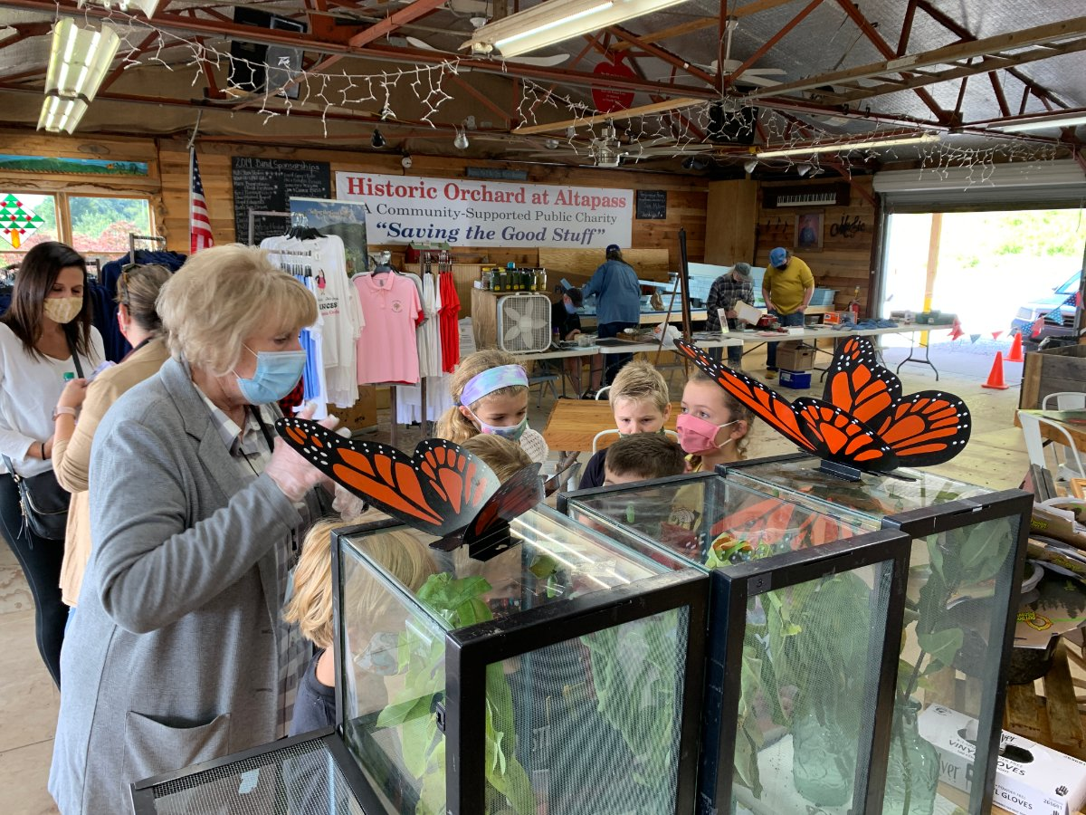 The Orchard is the perfect place for kids, even with masks. Beth Hilton, our executive director talked about the life cycle of the monarch butterfly to a group of attentive homeschoolers this past week. #828isgreat #blueridgeparkway #visitnc #monarchbutterfly #homeschool https://t.co/8t5NroL3eg