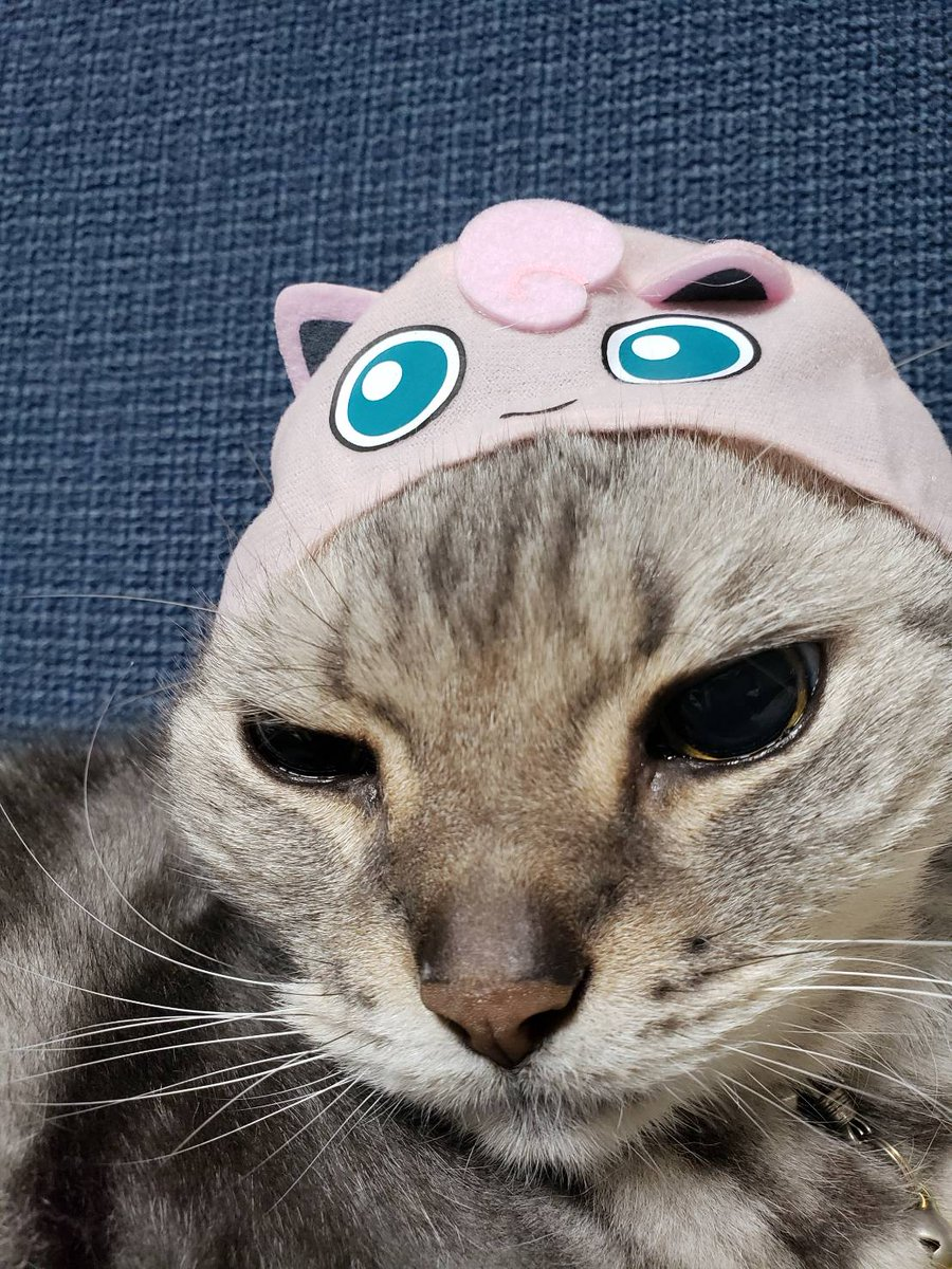 被り物好かんとよ😢ぴえん #1日1枚じろじいさん  #猫 #cat #ねこ #meow #にゃんだふるらいふ #上田ジローアメショ #17歳 #seventeen #おじいちゃん #おじいちゃん猫 #家猫 #大きい猫 #bigcat #アメショー #アメリカンショートヘア #americanshorthair https://t.co/JCbXSad8kS