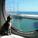 Image for the Tweet beginning: A ship's cat, meant to