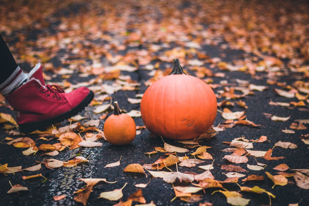Join us for a stroll through crisp fallen leaves and golden lit canopies to wander the Pumpkin Loop and see your favorite fall creatures. Break out your coziest autumn scarf + matching mask and find a pumpkin-perfect backdrop. Oct. 14-31 is #pumpkinseason! https://t.co/WeW0DEZO6x https://t.co/236CEZMyMK