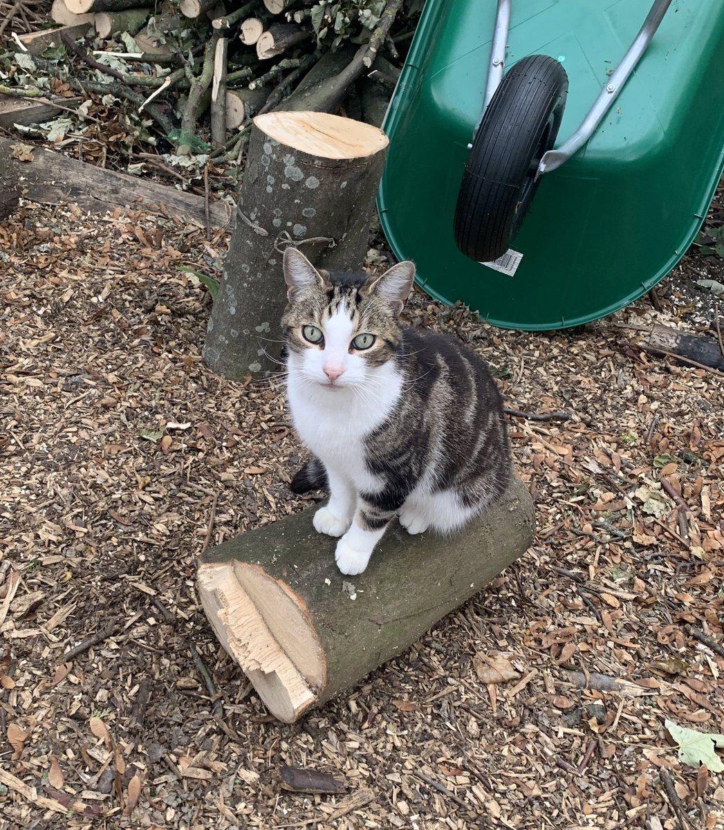 Hey everyone look at my cat sat on his log #meow https://t.co/55ZD5GZjB0