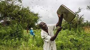 How people defended themselves against #locusts  by high pitched noises + moves with   ⏩Banging utensils+ drums ⏩music devices  ⏩horns of cars, motorbikes, bycicles ⏩tractors ⏩whistles ⏩emergency+  police sirens  #Locust  #Zambia #Namibia #Botswana #Zimbabwe #Somalia https://t.co/fp0PbllUkY https://t.co/C6l31BMnWa