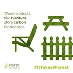 Image for the Tweet beginning: #Trees absorb #carbon as they
