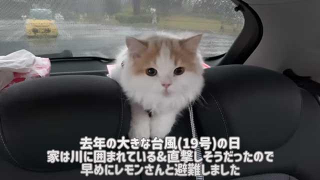 【昨日の人気記事】台風の日、猫と車に避難したら…… 車中泊したときの様子を記録した映像がためになる