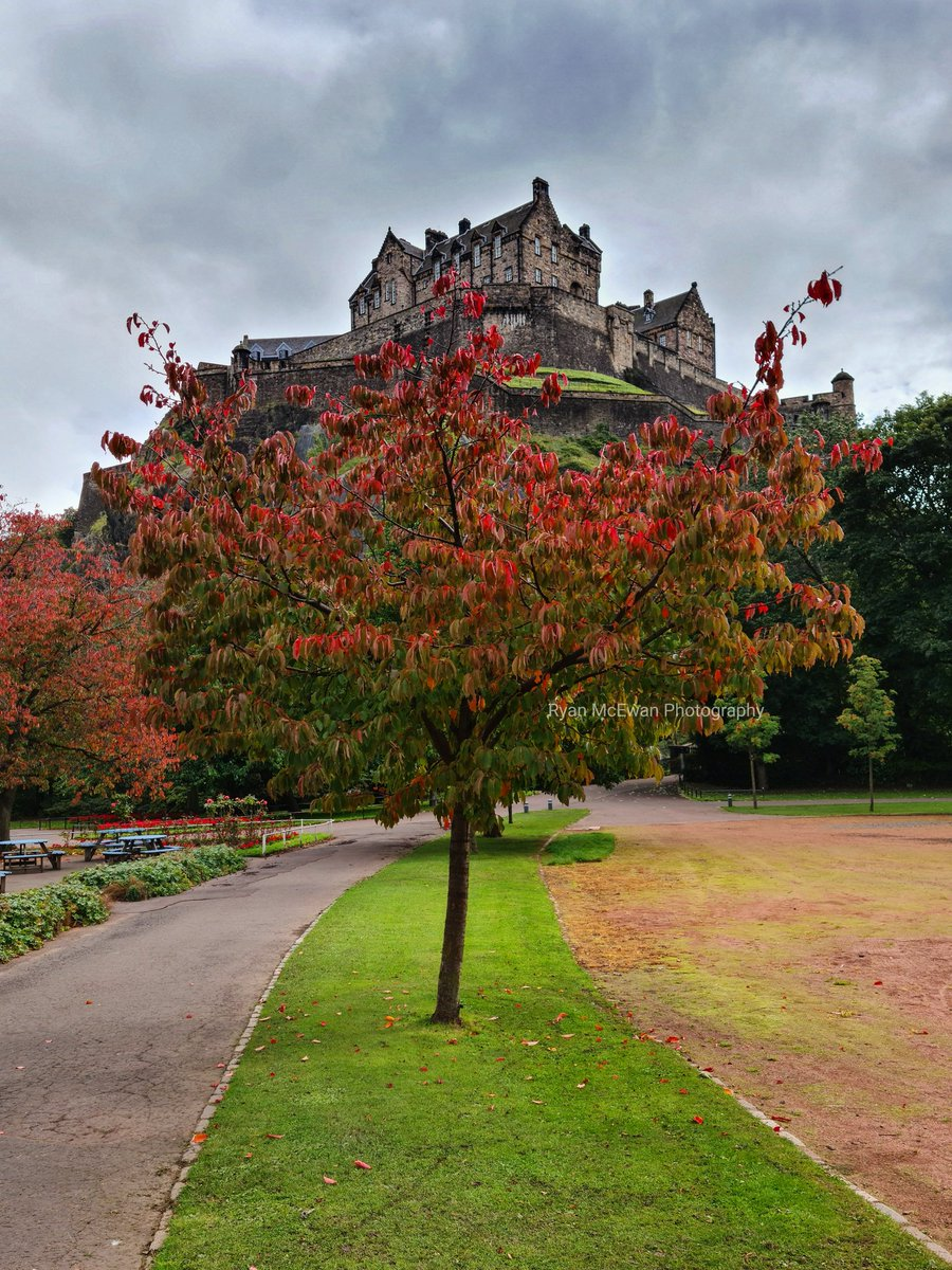 A walk through the gardens today to check out the colour of this tree #Edinburgh #Autumn https://t.co/0dtXHB1z4T
