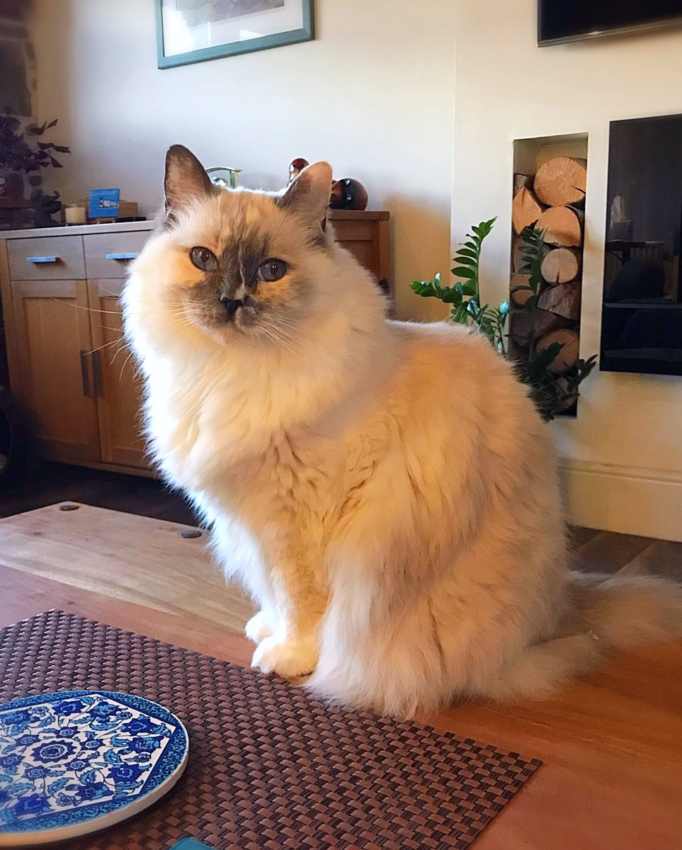 Hope mew have a relaxing evening after a tuff #FluffyFursday 💖😻💖 Ready fur the weekend?! 🐾 https://t.co/dro08CwUA2