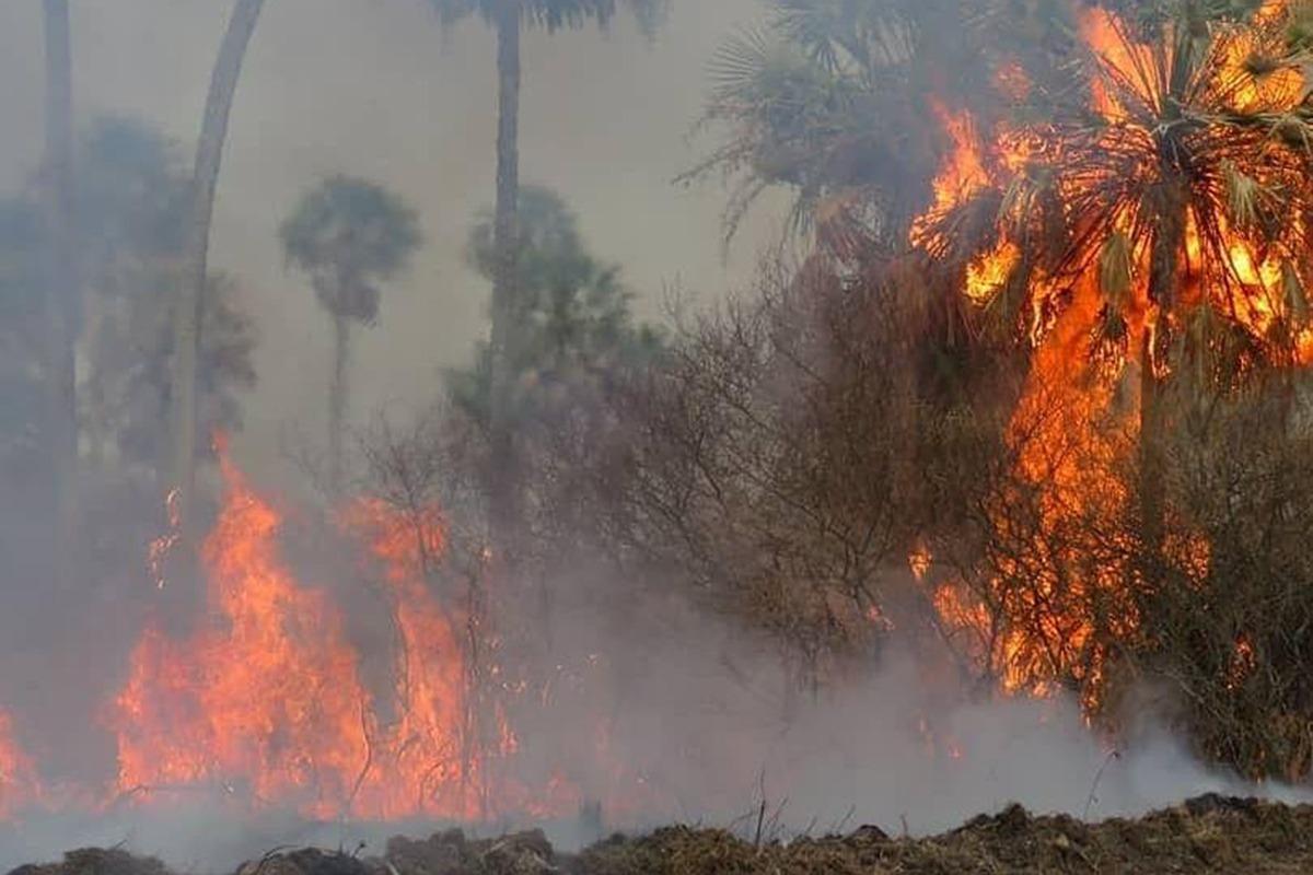 #LeydeHumedales #LeyDeHumedalesYa #fires #CaliforniaFires #AustralianFires #amazoniaemchamas #Amazonia #Incendios #IncendiosCordoba #IncendiosEnElDelta #IncendiosenRosario #AmericaLatina #Latinoamerica #America #EARTH_AGE #GreenNewDeal #naturalresources #naturaleza #natural #UN🙌