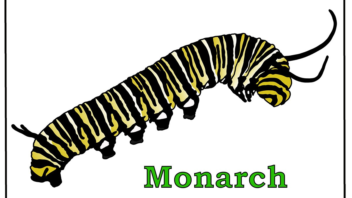 Free Monarch Caterpillar Coloring Page https://t.co/lZ30cNcF0G  #caterpillar #monarch #MonarchCaterpillar #MonarchButterfly #Butterfly #nature #bug #insect #insects #coloring #coloringpage #free #printable #coloringpages #larvae #caterpillars #butterflies https://t.co/3deiqA4HAm