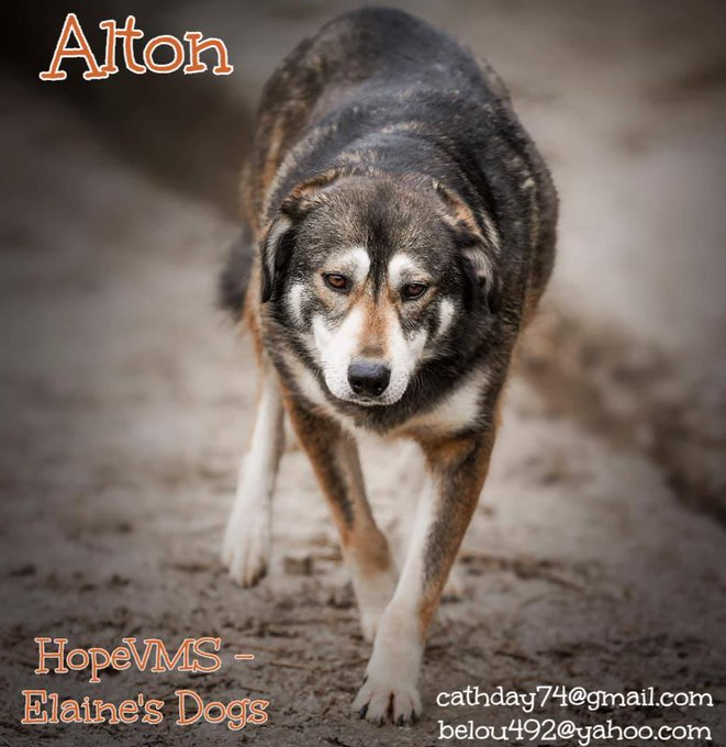 ALTON has been looking for a home ALL his life. At 4yo   he's never known a family or how much love they can give. It's so sad to see him walking around the shelter searching for something to make his heart sing. Can you make it sing? https://t.co/DLJ0WoRWMG #forgottensoulshour https://t.co/40m4ycnbGa