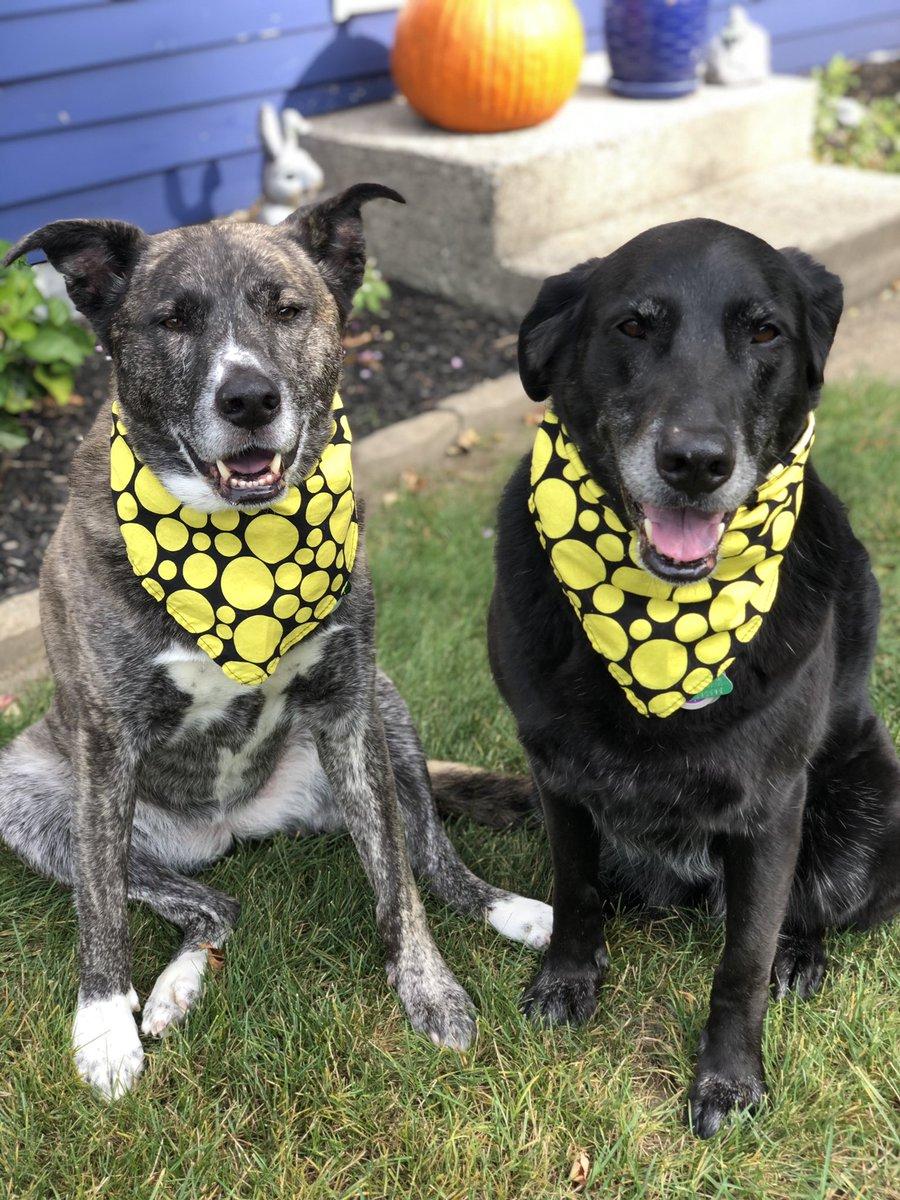 Happy Thursday friends! Love these happy faces! 🥰🐶💛🐶💛#daisyandrosie   #ThursdayMotivation #ThursdayThoughts #smiles #RescueDogs #dogsoftwitter #lovethem @dogcelebration #muttfaces #AdoptDontShop 💛🐾💛 https://t.co/afEc9rGph0