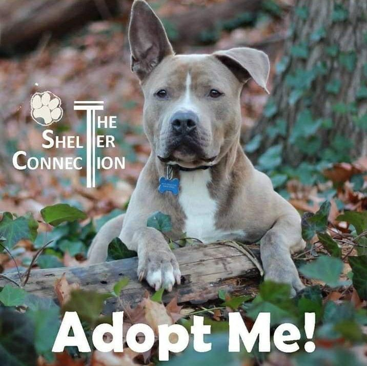 Please RT #Zeus this week? 💚🙏 Waiting for his pet free, forever home since 2011. Help this 10 year old dude with a RT please. Adoption fee paid by @SilentV91140832 💚 At The Shelter Connection #LongIsland #NYC   Info: https://t.co/RsCkeLOT8T  #forgottensoulshour #TeamZay https://t.co/ofDoTDJizr