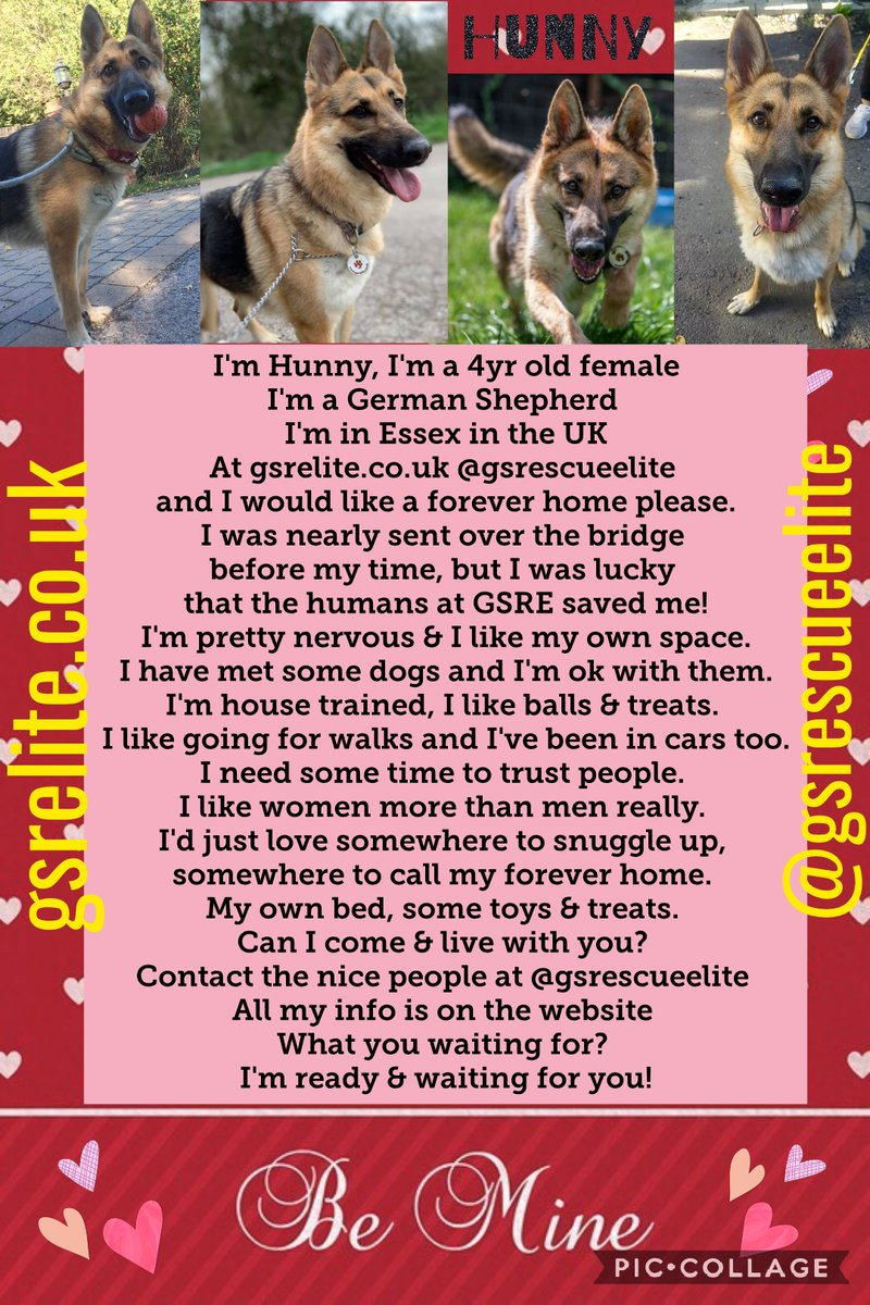 Could Hunny put her paws up at yours? Can she chill on your couch? She'd love you furever Have u got room in your heart & home for her? She is ready&waitin for you #AdoptDontShop #K9Hour @gsrescueelite https://t.co/NJIBHyMSXL #rehomehour #forgottensoulshour https://t.co/dDMvc6PIrJ
