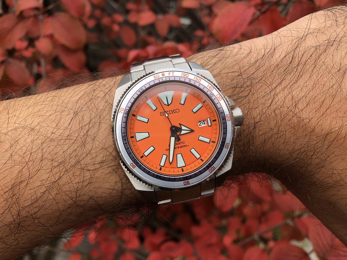 Fall in effect - the Seiko Samurai SRPC07 modded with a Doxa-style dive bezel; it just works   #Seiko #SeikoSamurai #SRPC07 #OrangeSamurai #seikomods #watchmodding @seikowatches @SeikoProspex https://t.co/sy7rnASIt1