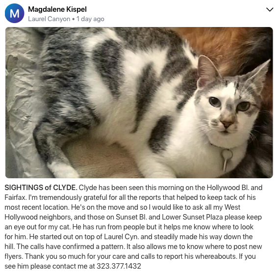 Missing cat from Laurel Canyon, may have been seen around Hollywood Blvd/Fairfax (Information from NextDoor)