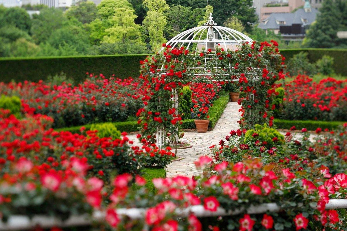 [明日から開催] 赤いバラ3万輪が咲く屋上庭園、ホテルニューオータニ(東京)に - ピエール・エルメ・パリのスイーツも -