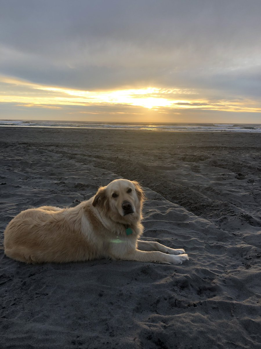 Enjoy this photo of my dog on the beach please https://t.co/lHlv3XRgq5