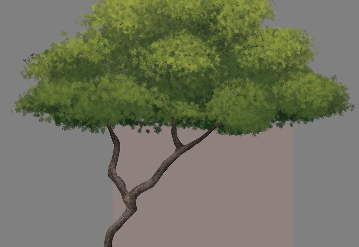 Had to take a break because my wrist was hurting but now I'm back to painting trees! #BlackBrush & #Tepeguaje paintings will be coming eventually to Youtube. #artistontwitter #art #digitalart #biological #illustration #botany #under100gang #under1kgang https://t.co/aRLsywljJn
