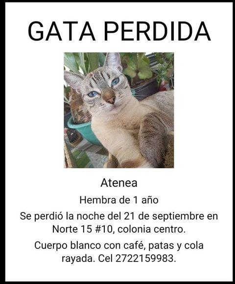 ⚠️⚠️ S.O.S para ATENEA ⚠️⚠️ Río Blanco, Veracruz.  Se extravió el 21 de septiembre en la calle Norte 15 #10, colonia centro, Río Blanco, Veracruz. ¿La has visto? https://t.co/kidmBGJfRP