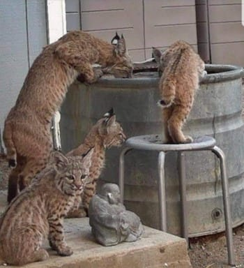 Via Jenn Ratcliff Disaster Assist Team (#DAT) — Fire Info & Resources 📷 📷📷📷📷📷📷📷📷📷📷📷📷📷 PLEASE LEAVE WATER OUT FOR #WILDLIFE FLEEING THE FIRES. 📷📷 📷 BRING YOUR ANIMALS IN AT NIGHT. 📷 DON'T LEAVE YOUNG CHILDREN UNATTENDED IN YOUR YARD. https://t.co/PyxLgJI3z9 https://t.co/R3wgTmHTLW