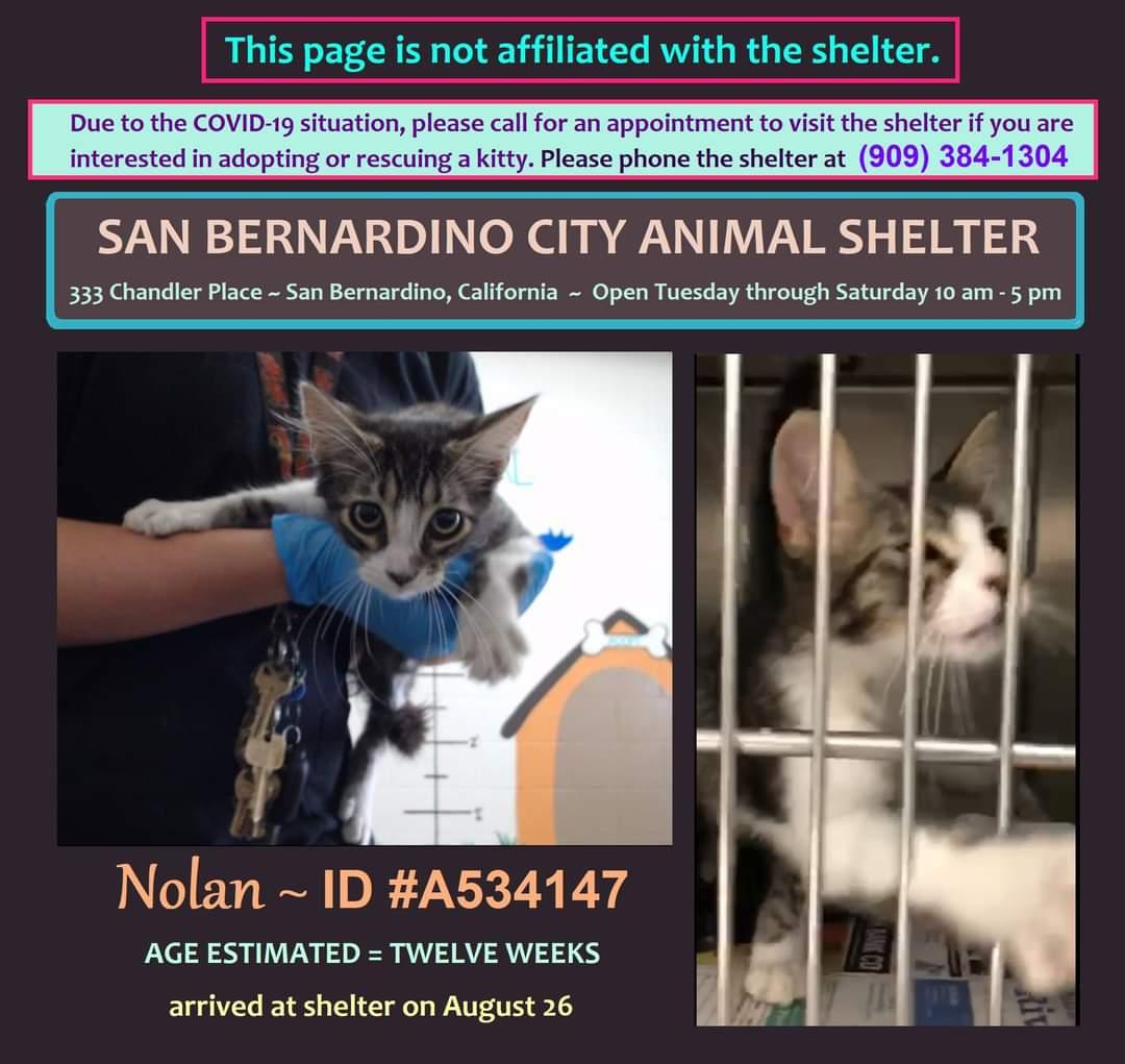 #kitten NOLAN is at SAN BERNARDINO CITY ANIMAL SHELTER, #California. https://t.co/4SwUlQIdDn https://t.co/sbAeKfJzku