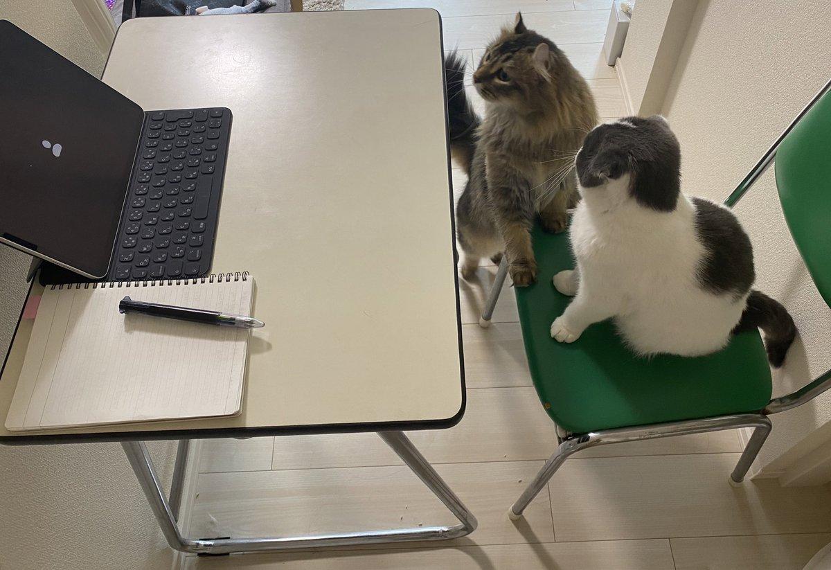 トイレから帰ってきたら、web会議に出る気満々の猫たちがいた