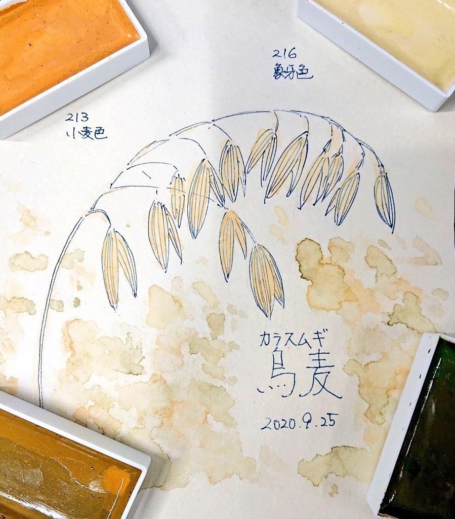 【今日は9月25日…】誕生花のひとつに「カラスムギ」がありましたので #顔彩 で描いてみました。花言葉は「音楽が好き」だそうですが…「絵が好き」とかそういう花言葉の植物はあるのかしら…メインの使用色は・213「小麦色」・216「象牙色」背景にうっすらと・26「鶯茶緑」・36「金黄土」