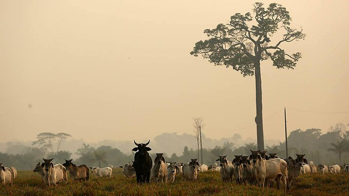 Em 2000, a cobertura florestal representava 81,9% da área total da floresta, proporção que se reduziu para 75,7% em 2018, segundo IBGE https://t.co/5SpYrCpXWC #jornalistavitor  #IBGE https://t.co/W2XjjXwtcj