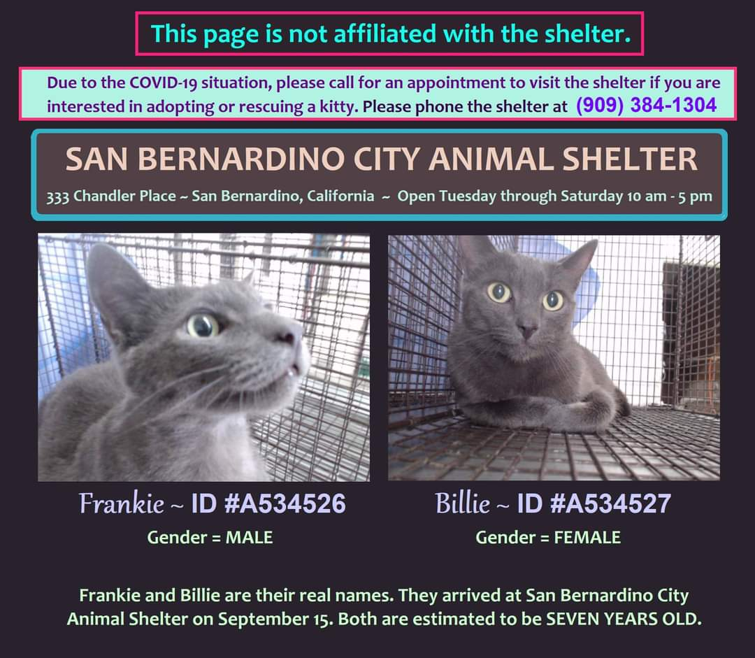 1 boy, 1 girl. FRANKIE & BILLIE are at SAN #BERNARDINO CITY ANIMAL SHELTER, #California. https://t.co/JWMzJ1eQZ5 https://t.co/D1Mq1b6H7B