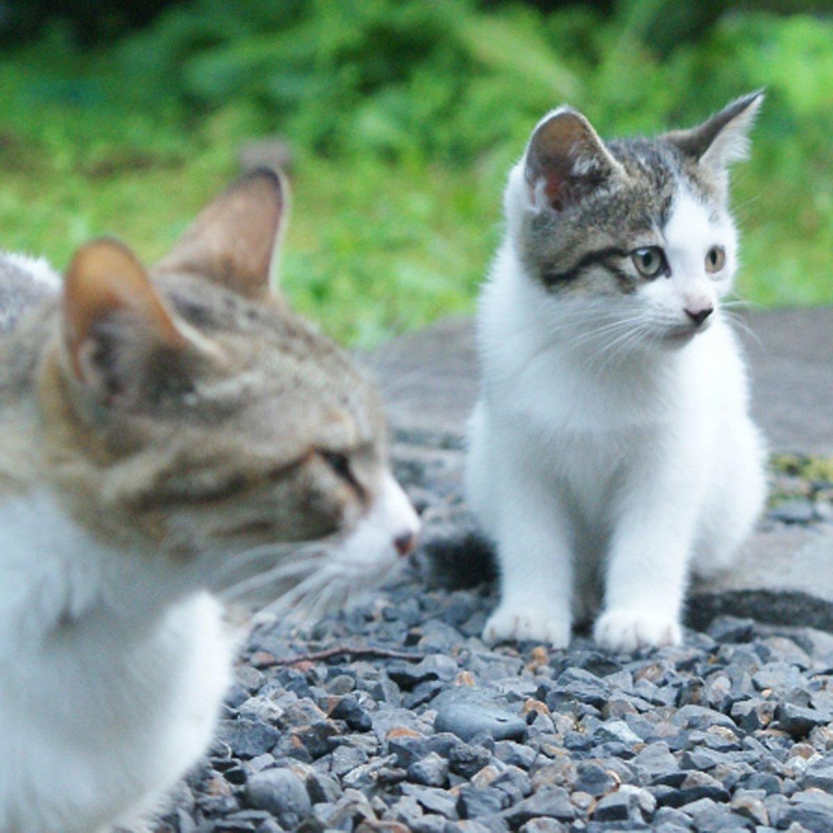 かわいいにゃんこ♪ #ハニーペット #HONEYPET #honeypet #猫 #ねこ #ねこ部 #にゃんすたぐらむ #にゃんこ #子猫 #ネコ #ねこのいる生活 #ねこのきもち #ねこのいる暮らし #kitty #catstagram #petstagram #instacat #meow #instagood #follow #followme https://t.co/rNwkzNOn9n