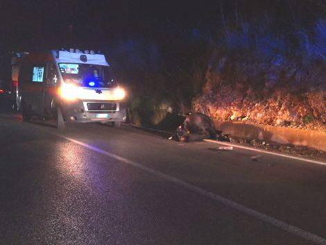 Schianto auto-mucca sulla SS186 di Monreale, sotto choc 5 passeggeri - https://t.co/2303mlRR0M #blogsicilianotizie