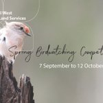 Need ideas for school holiday activities? Why not register the kids for our Spring Birdwatching Competition? There are 28 great prizes to be won. They might even spot a Regent Honeyeater!  Details ➡️ https://t.co/xLWiRpnq0v