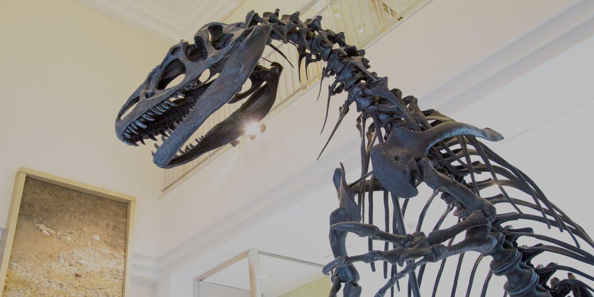 島根県にある世界的にも珍しい泊まれる博物館「奥出雲多根自然博物館」がすごい…  博物館には恐竜や古代魚の化石などを展示。ホテルと博物館が同じ建物内にあり、宿泊者であればお昼とは一味違う「ナイトミュージアム」を楽しめます🦖 1人あたり5000円で泊まれるし、夜の博物館という特別な体験を… https://t.co/rDVQ2GNXtO