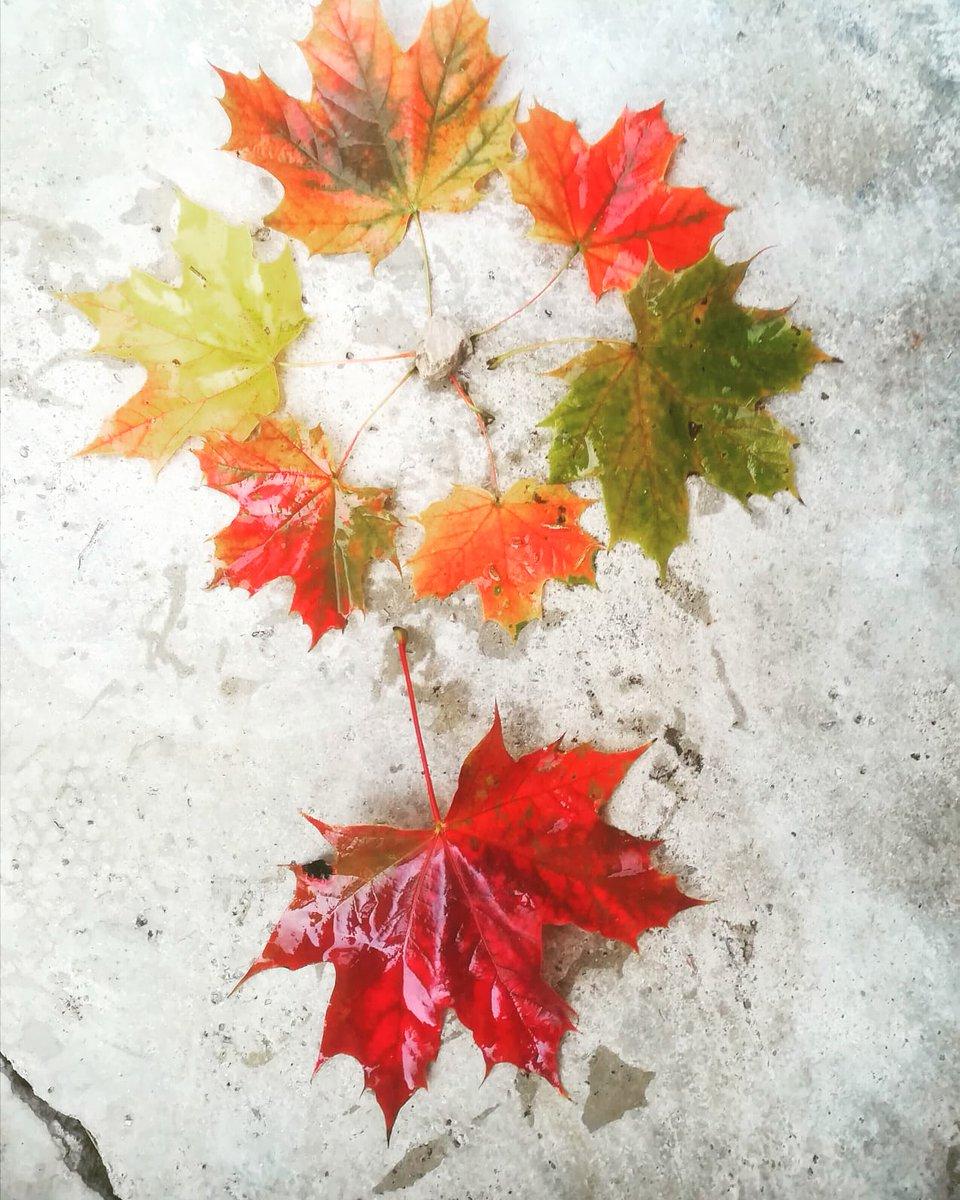 È iniziata la danza dei colori. #autunno #25sette...