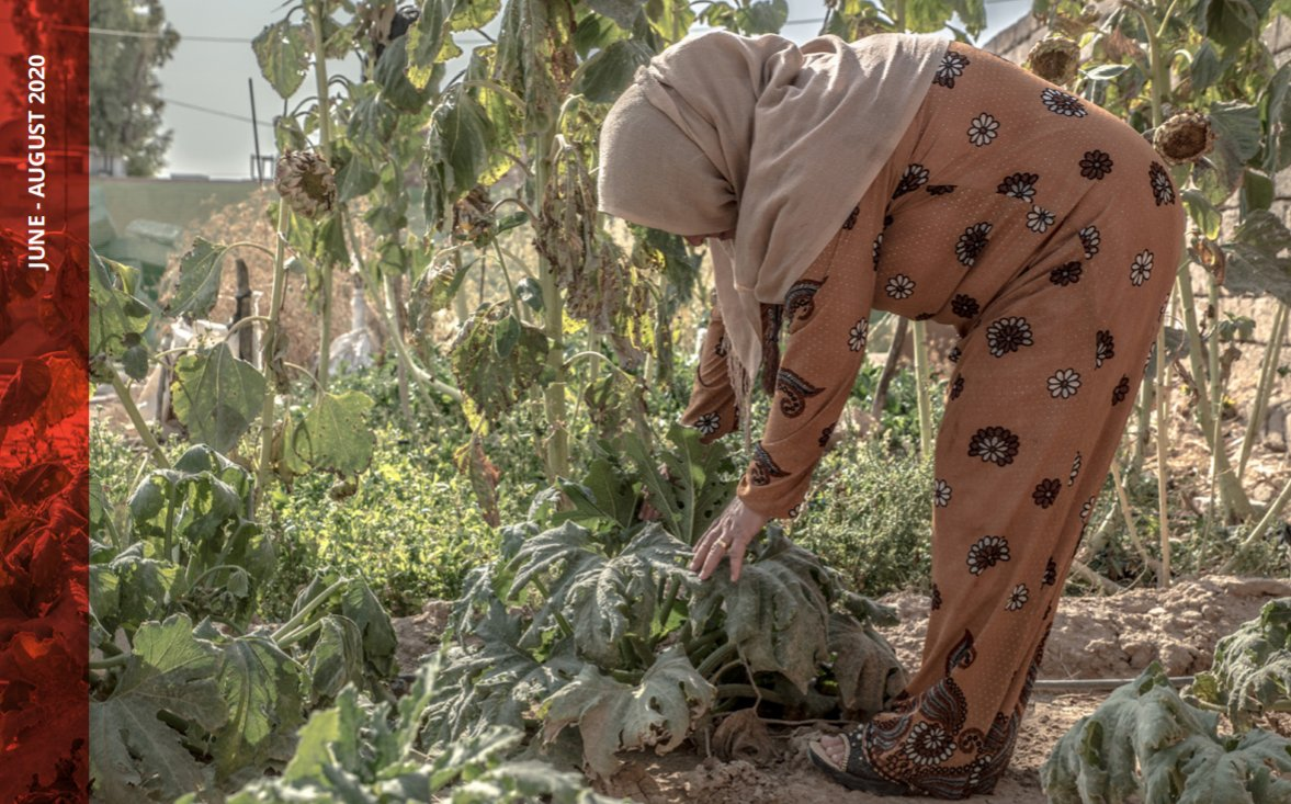 "New report ""Food Security in #Iraq: Impact of #Covid-19"" by #FAO, #IFAD, #WFP & the #WorldBank analyses how the pandemic is affecting households' access to food, food production & availability. https://t.co/wFrKPBqe2p https://t.co/kbWXnKv6pr"