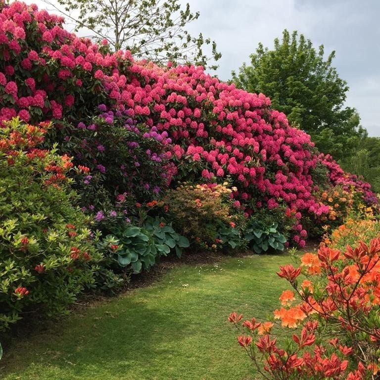 イギリススコットランド北東部の町アバディーンにあるヘイズルヘッドパークです。春は色とりどりの花々が咲き誇るとても美しい公園です。 #イギリス #春  #スコットランド  #天然石  #花 https://t.co/Jr0hzttUIN