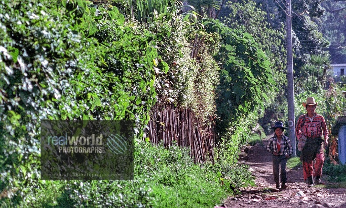 A man and a young boy walk a dusty path in Solola, Guatemala, Central America. #world #photojournalism #guatemala #solola #rural #sweden #malmo #travelphotography #realworldtelevision #documentary #garymoorephotography #denmark #realworldphotographs #nikon #cameraman #stock #CA https://t.co/ND9rLjM5Xn