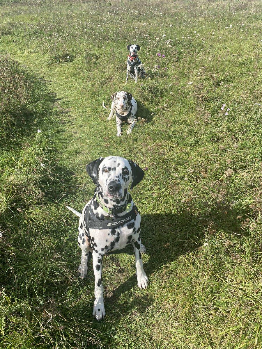 #Dalmatians #CovidUK #COVID19 #SocialDistancing #1metrerule #dogsoftwitter  #BorisJohnson  dogs following the rules https://t.co/5XgDK8pY3w