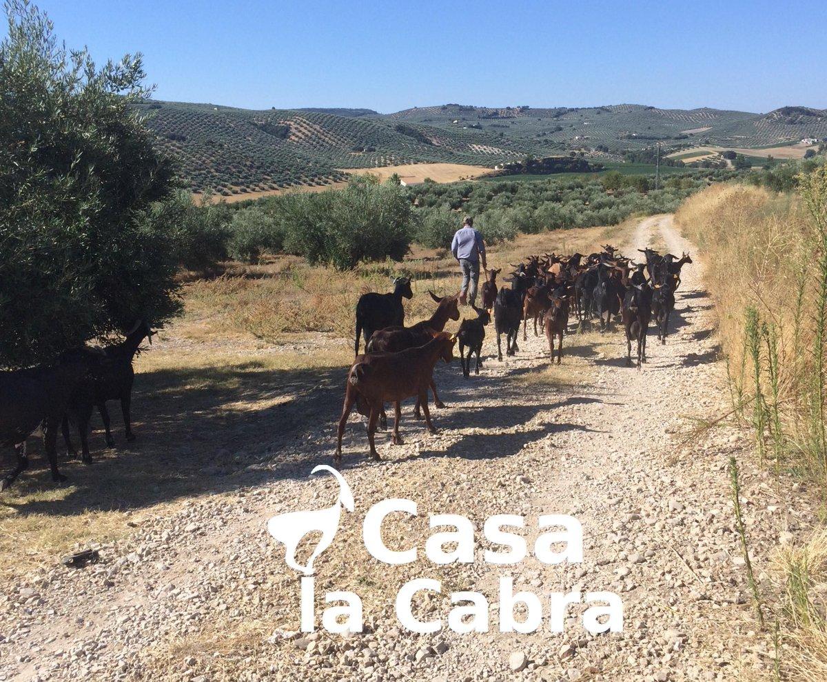 ¡Mucho tráfico! https://t.co/NvYyLmrcaD  #CasaLaCabra #Moclín #GranadaParadise #Granada #DreamingGranada #loves_granada #breathtaking #epicview #sun #spain #traveltospain #travelblogger #travelphotography #nofliter #granadaturismo #gollizno #rutadelgollizno #StayInMoclin https://t.co/SlCkYYEqBE